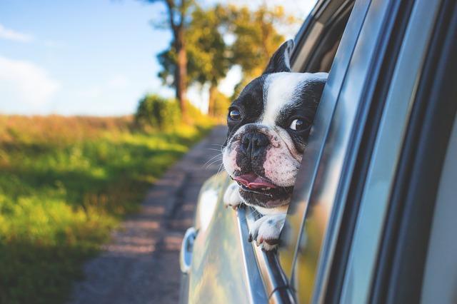 buldoček v okně auta